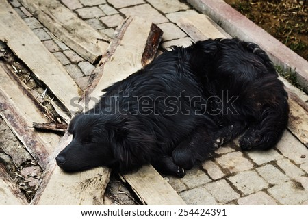 Homeless lonely black dog with closed eyes is laying on the street - stock photo