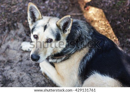 Homeless mongrel dog lying on the ground and looking up. A dog from a shelter waiting for its owner - stock photo