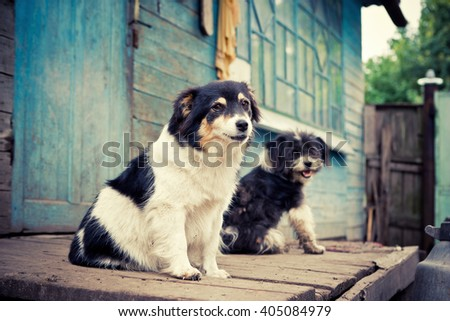 Homeless naive sad dogs sitting on a wooden porch. - stock photo