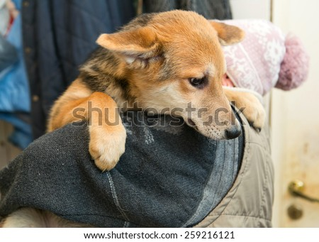 Homeless puppy from a shelter at the hands of a woman - stock photo