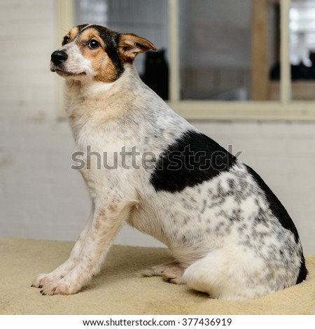 homeless puppy in a shelter for dogs - stock photo