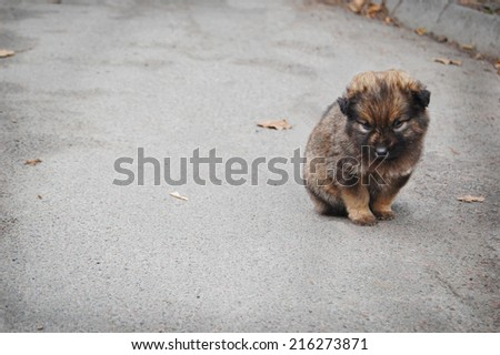 Homeless puppy, sentiments of loneliness, sadness, disappointment - stock photo