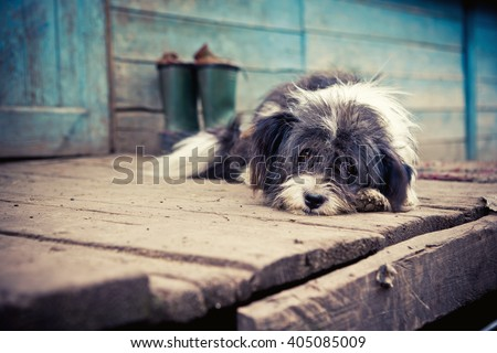 Homeless sad dog lying on a wooden porch. - stock photo
