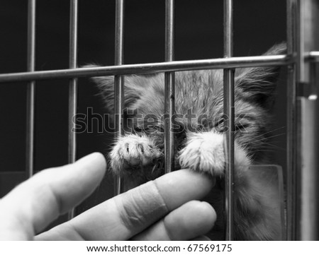 Homeless sick cat in a cage - stock photo