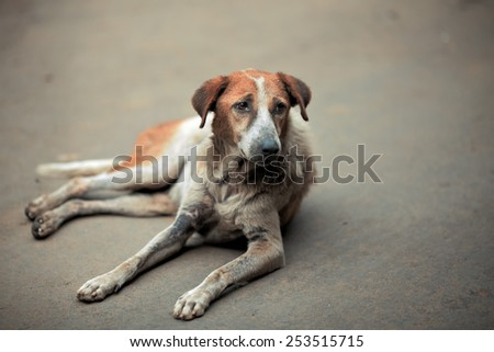 Homeless sick dog lying on the pavement and looks haggard