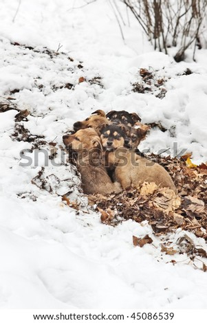 Homeless small puppies getting warm in leaves in winter, selective focus - stock photo