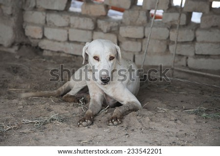 Homeless stray dog - stock photo