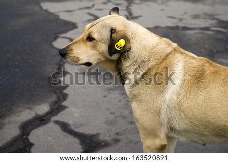 Homeless stray dog in Ukraine - stock photo