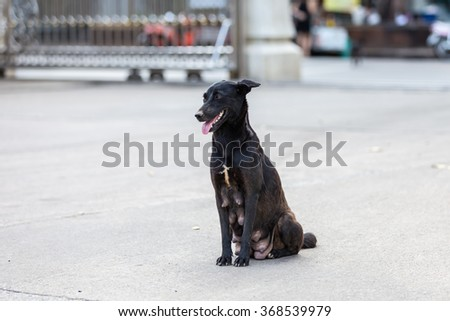 Homeless stray dog on the street - stock photo