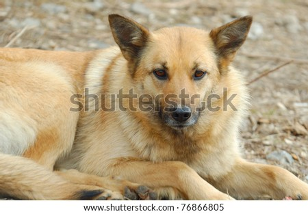 Homeless stray puppy on white background - stock photo