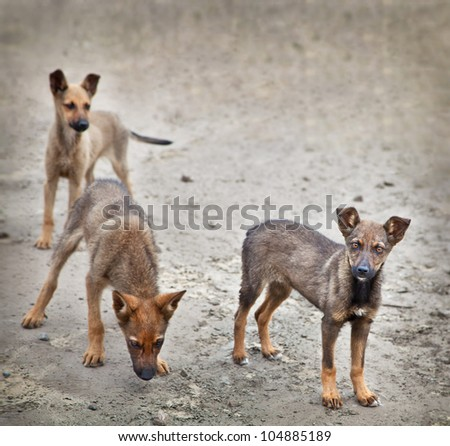 Homeless stray small dog outdoors. Cute three  puppy - stock photo