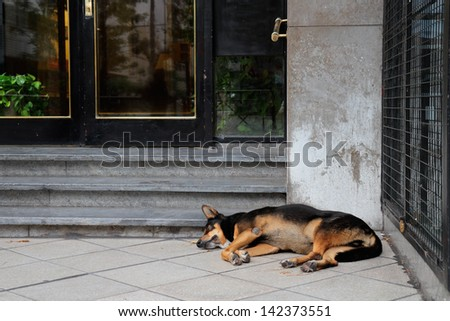 Homeless, stray street dog sleeping in front of a city building  - stock photo