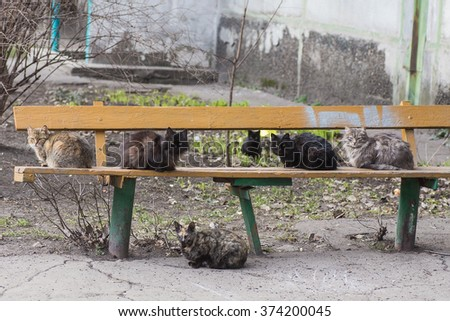 Homeless street hungry cat finding food in the rubbish - stock photo
