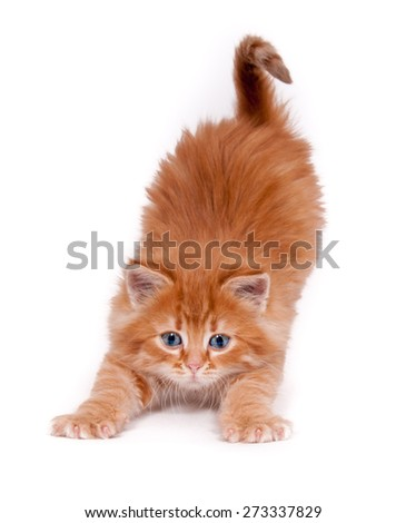 Homelessness Red kitten stretches isolated on a white background - stock photo