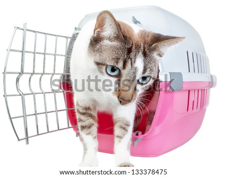 Homemade cute cat out of the cage. On a white background. - stock photo