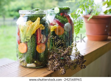 Homemade pickles in brine with garlic, dill and horseradish - stock photo