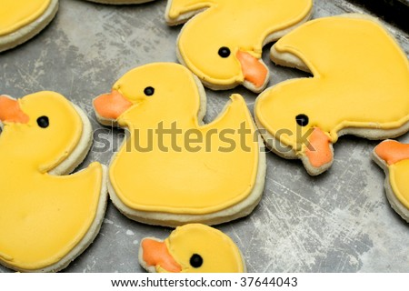 Homemade sugar cookies, decorated with royal icing.  Duck shaped cookies on a wax paper covered cookie sheet. - stock photo