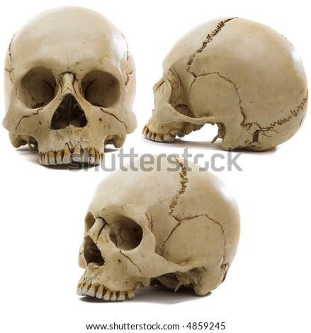 Homo sapience cranium isolated on white background - stock photo