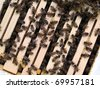 Honey Bee Colony: bees gathered on top of a wooden hive box. - stock photo