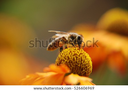 bees stock images royaltyfree images amp vectors