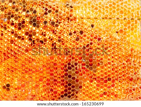 honey bee hive isolated on background in gold - stock photo