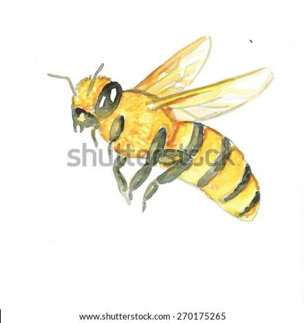 Honey bee illustration - stock photo