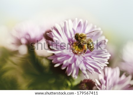 honey bee with flower, filtered - stock photo