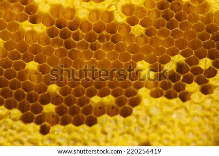 Honey beehive - close up. Background - stock photo