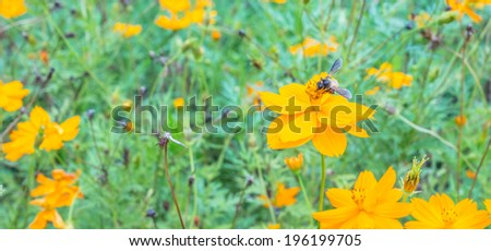 Honey bees collecting pollen - stock photo