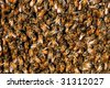 honey bees in a swarm make a hive background - stock photo