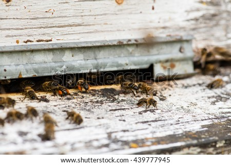 Honey bees swarming and flying around their beehive, macro - stock photo