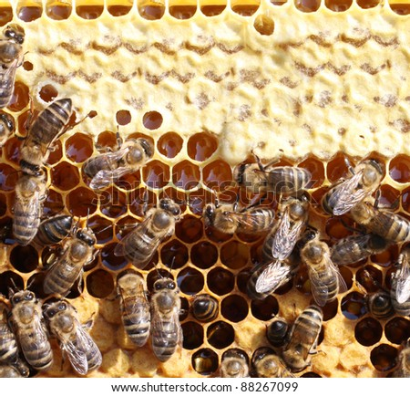 honey cells and working bees