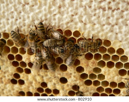 Honey cells with working bees - stock photo