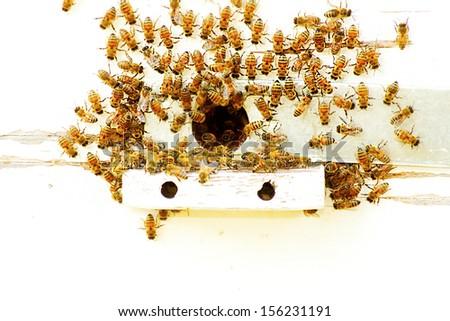 Honey comb - stock photo