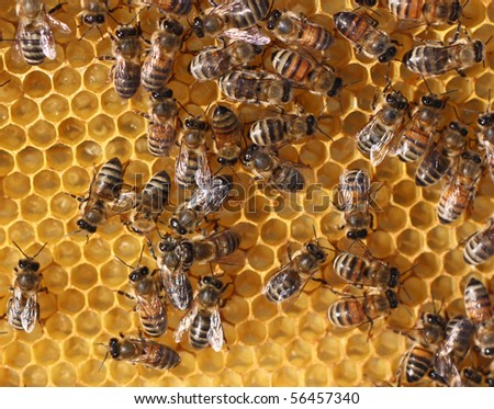 honey comb and a bee - stock photo