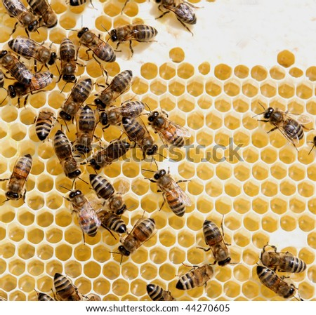 honey comb and a bee working - stock photo