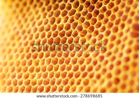 honey comb pattern - stock photo