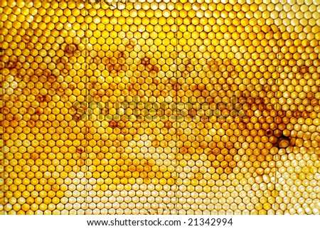 Honey Comb with Pollen and various light - stock photo