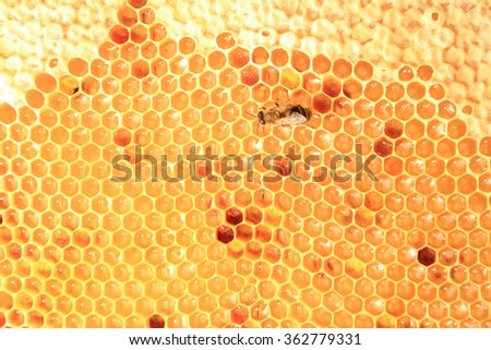 honey in wax cells as nice natural background - stock photo