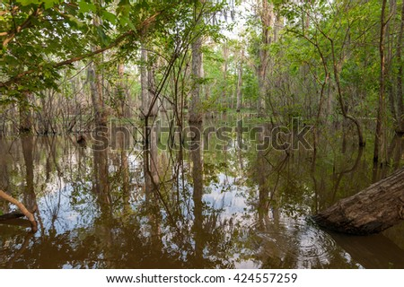 Honey Island Swamp Tour With Jungle Forest and Tree in New Orleans, Louisiana