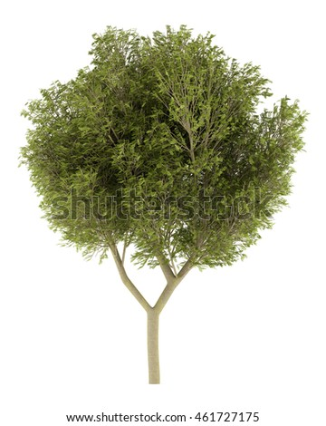 honey locust tree isolated on white background. 3d illustration