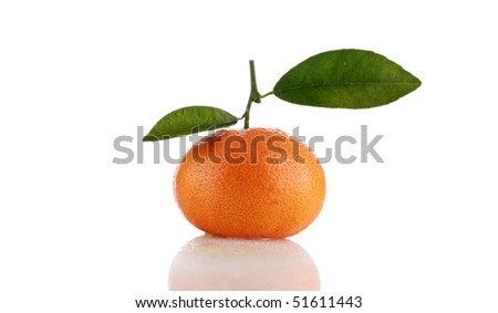 Honey-Tangerine Marmalade Recipes — Dishmaps