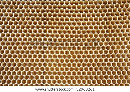 Honey texture - stock photo