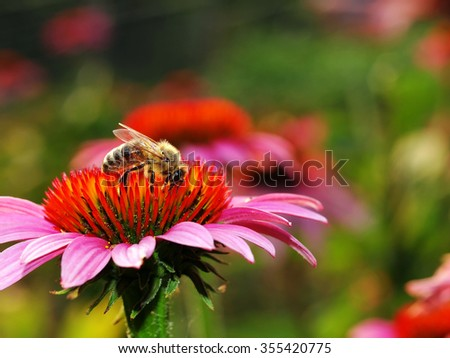 Honeybee  - stock photo