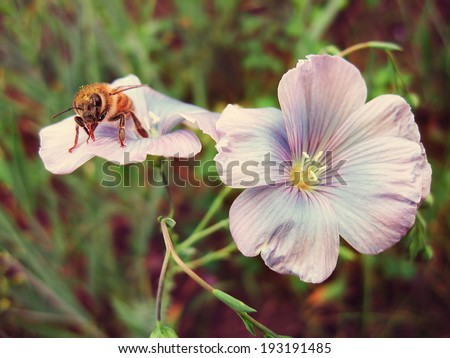 Honeybee on purple flower - stock photo