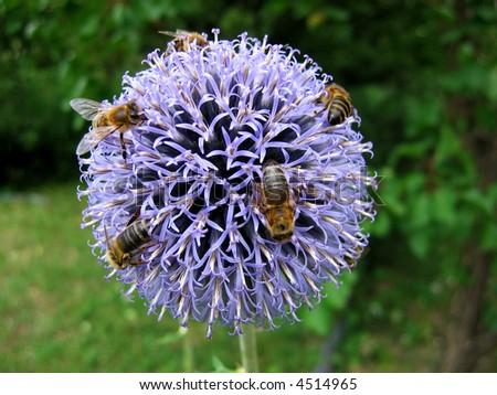 Honeybees - stock photo