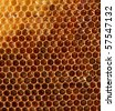 honeycomb background - stock photo