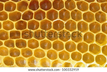 Honeycomb background or texture - stock photo