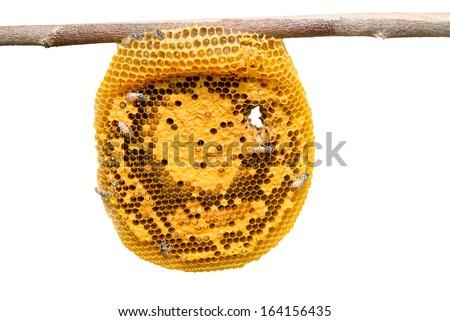 Honeycomb close up isolate on white - stock photo