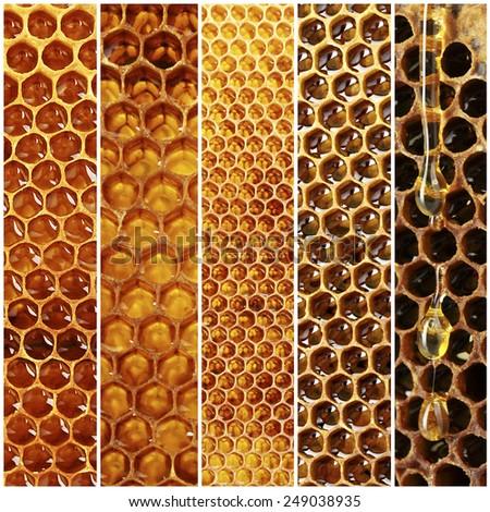 Honeycomb collage - stock photo